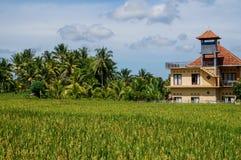 Huis in padieveld stock afbeeldingen