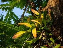 Huis Thialand van de bromelia het groene Tuin stock foto