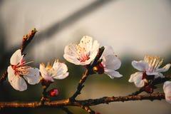 Huis van de lentebloemblaadjes royalty-vrije stock afbeelding