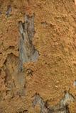 Huis van termieten op de oppervlakte van een boomboomstam Een huis van de textuur termites' klei royalty-vrije stock fotografie