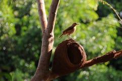 Huis van vogel stock foto