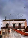 Huis van vogels Stock Afbeelding