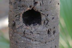 Huis voor een vogel Stock Foto