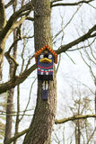 Huis voor vogels Royalty-vrije Stock Afbeelding