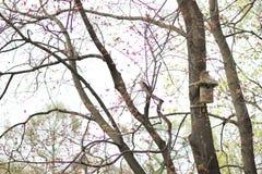 Huis voor vogels Stock Foto's