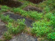 Huis voorgazon over looppas door crabgrass en onkruid stock fotografie