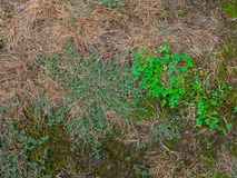 Huis voorgazon over looppas door crabgrass en onkruid royalty-vrije stock afbeeldingen