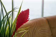 Huisdecor met rood blad en gras in planter royalty-vrije stock foto's