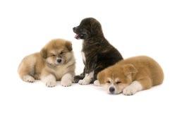 Huisdieren royalty-vrije stock fotografie