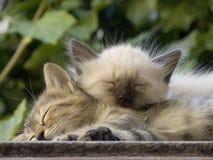 Huisdieren Royalty-vrije Stock Afbeeldingen