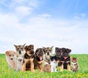 huisdieren royalty-vrije stock foto's