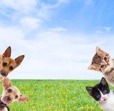 huisdieren Stock Foto's