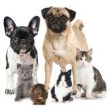 huisdieren stock fotografie