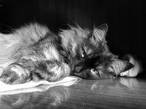 huisdieren Stock Afbeeldingen