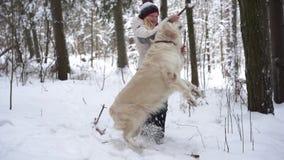 Huisdieren in aard - mooie golden retrieverspelen met de eigenaar met een stok in een de winter snow-covered bos stock footage