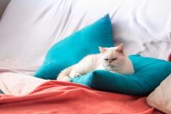 Huisdieren als deel van het binnenland royalty-vrije stock fotografie