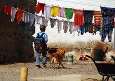 Huisdieren en kleuren Stock Foto's