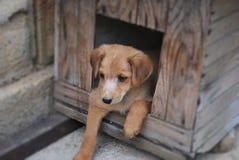 Huisdieren - hondzitting in een doos in de werf Stock Afbeeldingen
