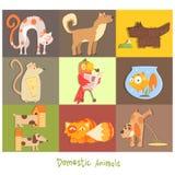 Huisdieren, Katten, Honden en hun Acties, Emoties Royalty-vrije Stock Foto's
