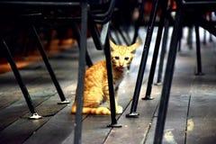 Huisdieren Leuk Dier stock foto