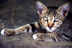 Huisdieren Leuk Dier stock afbeelding