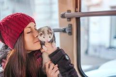 Huisdierenfret die een rit op stadstram nemen Stock Afbeeldingen