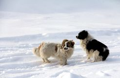 Huisdierenhond Stock Foto