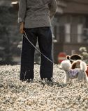 Huisdierenhonden die in het park met hun eigenaar spelen terwijl het bloemstuifmeel in de lucht vliegt die allergie kon teweegbre stock foto