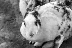 Huisdierenkonijn in een kooi Royalty-vrije Stock Afbeeldingen