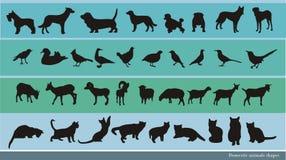 Huisdierenvector Stock Foto's