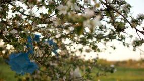 Huishoudelijk afval Plastic afval op de takken van tot bloei komende appelbomen Plastic verontreiniging van de planeet, nul afval stock video