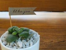 Huisinstallatie in een ceramische pot op een houten achtergrond Royalty-vrije Stock Afbeelding