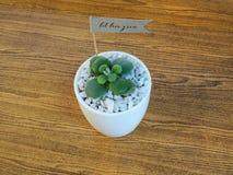 Huisinstallatie in een ceramische pot op een houten achtergrond Stock Fotografie