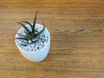 Huisinstallatie in een ceramische pot op een houten achtergrond Royalty-vrije Stock Fotografie