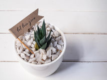 Huisinstallatie in een ceramische pot op een houten achtergrond Stock Foto