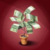 Huisinstallatie met dollars leafes Stock Afbeelding