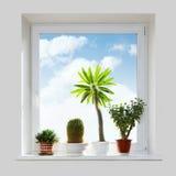 Huisinstallaties op de vensterbank Royalty-vrije Stock Foto