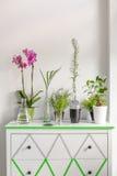 Huisinstallaties op een witte die ladenkast met washiband wordt verfraaid stock afbeeldingen