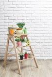 Huisinstallaties, succulents Stock Foto's