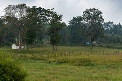 Huisvesting op rand van Ilapura-moerasland, Karnataka, India stock foto