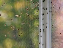Huisvliegen Stock Fotografie