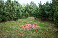 Huisvuil in het bos Royalty-vrije Stock Afbeelding