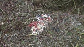 Huisvuil in het bos stock video