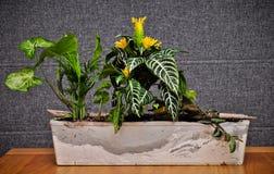 Huiswildernis in homadeplanter stock fotografie