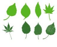 Huit feuilles vertes Images libres de droits