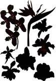 huit silhouettes d'orchidée Images stock