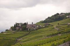 Huizen in het midden van wijngaarden op een bewolkte dag Stock Foto