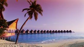 Huizen over het transparante stille zeewater en een palm maldives stock footage
