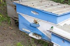 Huizen van de bijen de apiaryseveral bij in de tijd van de de lentezonsondergang stock foto's