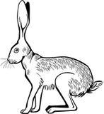 Huka sig ned för hare vektor illustrationer